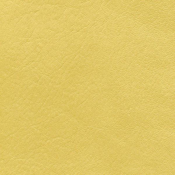 HAI – F6410983 mimosa
